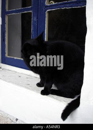 Black cat sitting on window ledge of French village house - Stock Photo