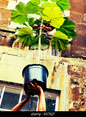 Couple passing a plant out of a window - Stock Photo