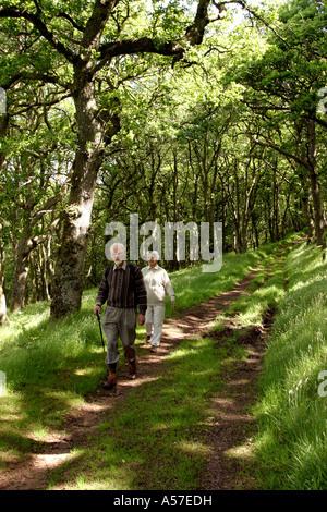 UK Devon older walkers in Exmoor oak woodland - Stock Photo