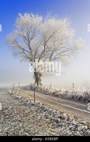 Field path in a winterly landscape with hoarfrost and fog, Fribourg, Switzerland - Stock Photo