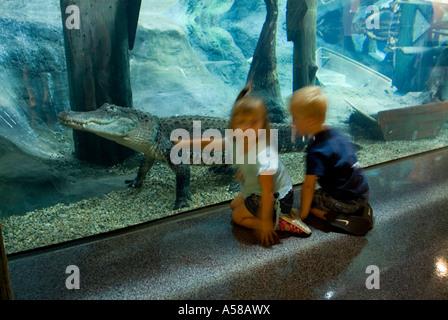 Aquarium exhibit at the National Mississippi River Museum ...
