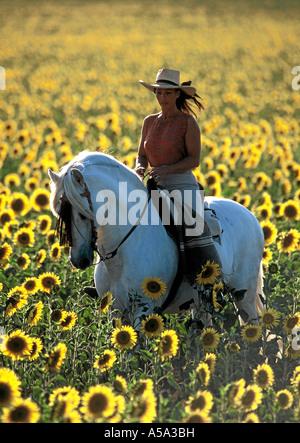 Pura Raza Espanola Andalusier Andalusian Horse - Stock Photo
