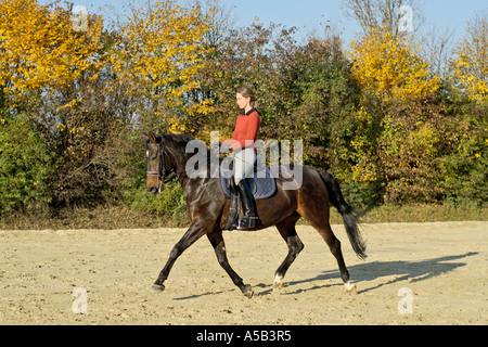 Young dressage rider on back of  a German horse - Stock Photo