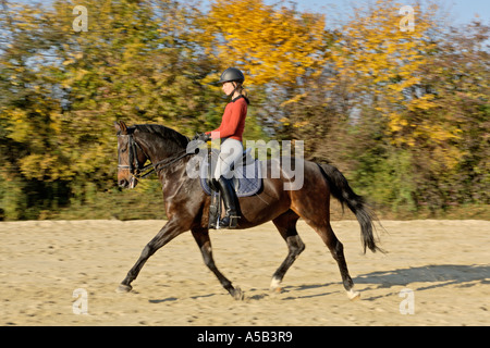 Young dressage rider on back of  a German horse in trot - Stock Photo