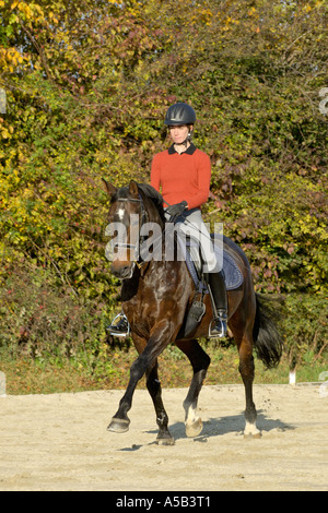 Young dressage rider on back of German horse in trot - Stock Photo