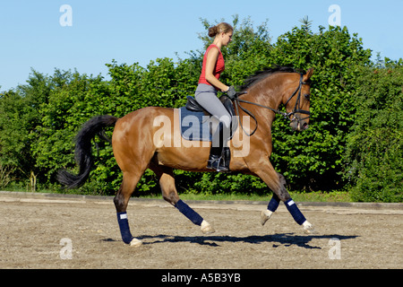 Teenage dressage rider on back of Hanoverian horse in canter - Stock Photo