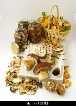 Assorted edible mushrooms - Stock Photo