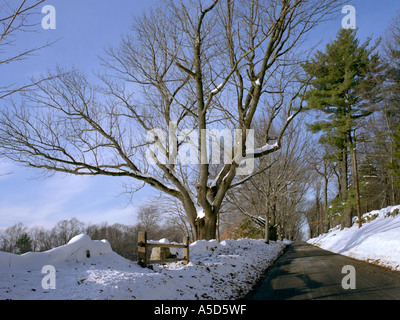 A snow covered tree in a rural setting - Stock Photo