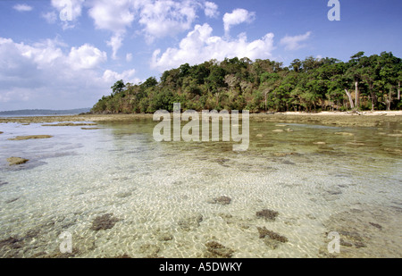 India South Andaman Island Chirya Tapu forest fringed beach - Stock Photo
