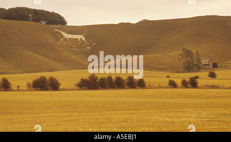 Cherhill White Horse ancient figure of a horse cut into the chalk downs Wiltshire ENGLAND - Stock Photo