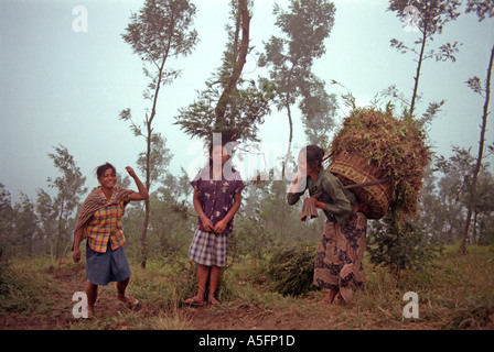 Dawn encounter with a group of Javanese women on the slopes of Gunung Mount Merapi nr Selo Java Indonesia - Stock Photo