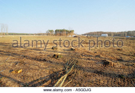 Clear cutting for broadening a driveway of motorway A 14 near Naunhof Germany - Stock Photo