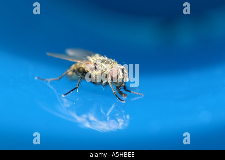 Fly in blue plastic cup - Stock Photo