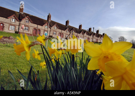 Daffodils in gardens in front of a row of flint terrace houses in Glynde East Sussex - Stock Photo
