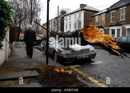Fallen tree on a Mercedes car in Kew west London A victim of strong winds which devastated the UK on 18 January - Stock Photo