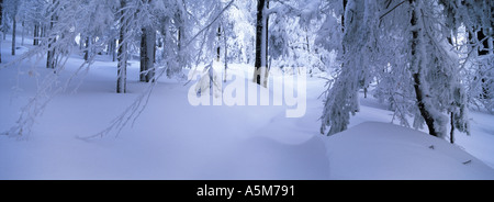 path through deeply snowed up forest Arrach Bavarian Forest Upper Palatinate Bavaria Germany Europe - Stock Photo