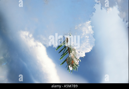 Snow covered fir twig - Stock Photo