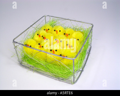 Chick In The Cage As Symbol For Mass Animal Husbandry Stock Photo