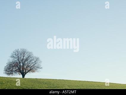 Bare tree, field, and blue sky - Stock Photo