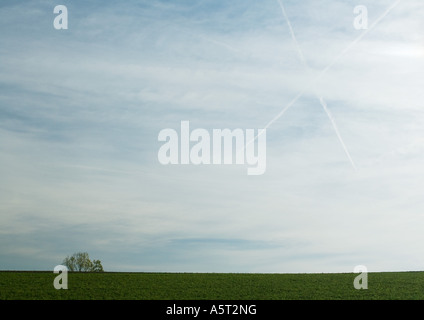 Sky with vapor trails forming 'X' and tree in distance - Stock Photo