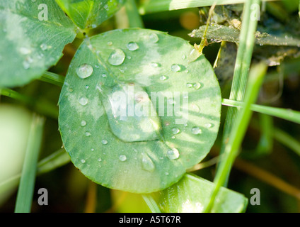 Drops of water on leaf - Stock Photo