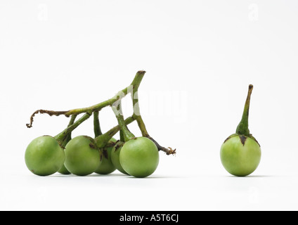 Green pea eggplants - Stock Photo