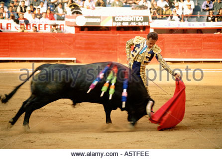 Bull and bullfighter in duel. (Mexico City, Mexico) - Stock Photo