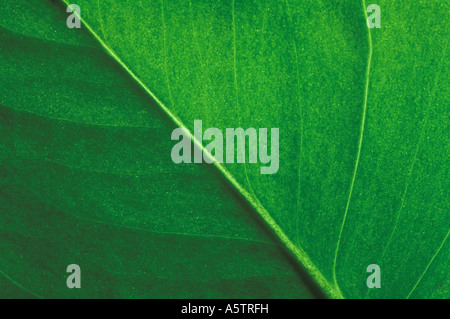 Close Up Detail Of Green Leaf - Stock Photo