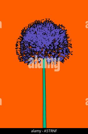 Graphic pattern - Allium illustration - Stock Photo