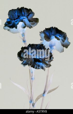Graphic pattern - Flowers - Stock Photo