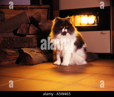 Cat Sitting In Front Of Fireplace Stock Photo, Royalty Free Image ...