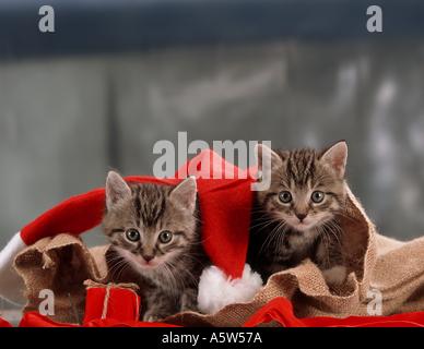 Christmas: two kittens in gunny sack Stock Photo