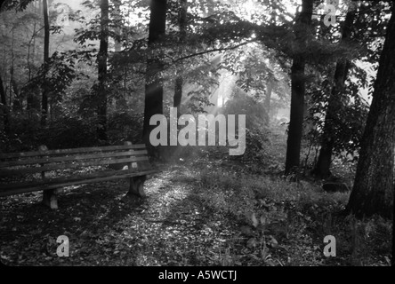 Black and white fine art landscape sunlight streaming through trees onto old bench at dawn - Stock Photo