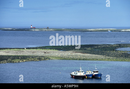 The view from inner farne islands looking towards outer farne with the lighthouse in the background northumberland - Stock Photo