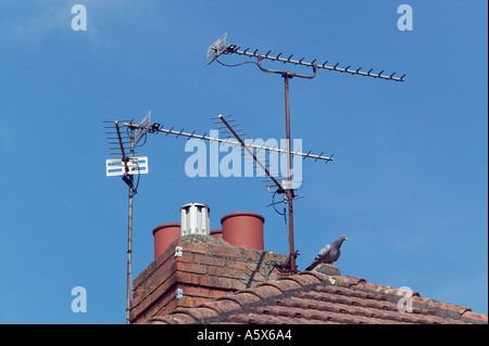 TV aerials on rooftop with pigeon Cardiff South Wales UK - Stock Photo