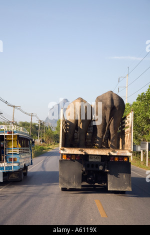 Asian Elephant being Transported by lorry and overtaking road vehicles on route to Phuket; Animal transport in Krabi - Stock Photo