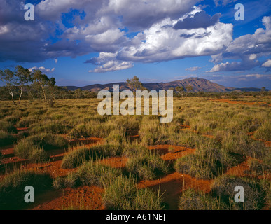 Mt Sonder and spinifex grass landscape West Macdonnell Ranges National park Northern Territory Australia - Stock Photo