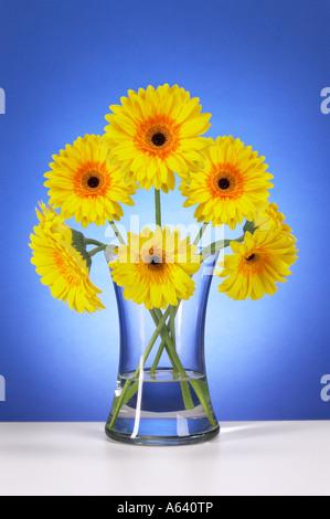 Yellow Gerbera Daisies Flowers In Glass Vase - Stock Photo