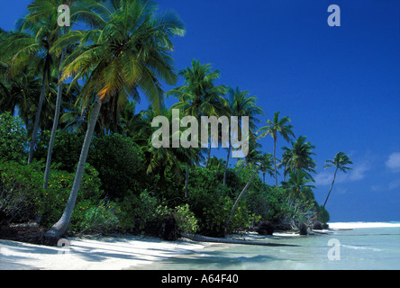 tropical beach with coconut palm trees Maldives - Stock Photo