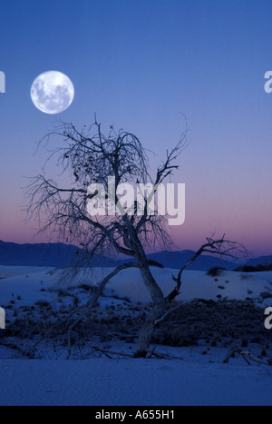 White Sands National Monument New Mexico United States - Stock Photo