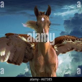 Pegasus foal - Stock Photo