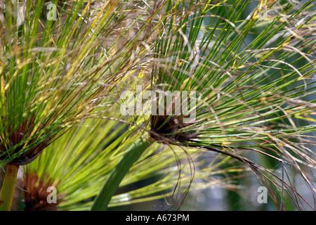 Close up of fern Southwest Florida - Stock Photo