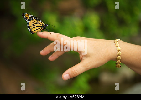 Monarch butterfly on woman's hand