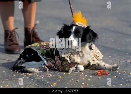Dog in costume Carnival Venice Italy - Stock Photo