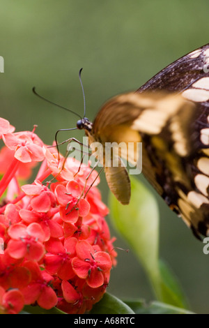 Butterfly on a red flower A - Stock Photo