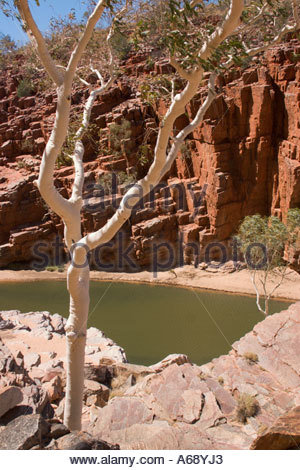 Ghostgum, Red Cliffs and Waterhole in Ormiston Gorge in West MacDonnel National Park in the Northern Territory Australia - Stock Photo