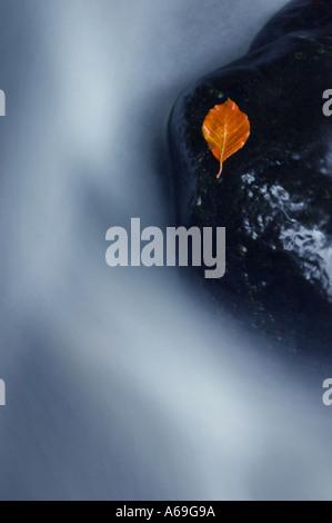 Autumnal leaf in Glenoe Co Antrim Northern Ireland - Stock Photo