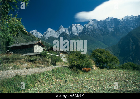 China, Yunnan, Tiger Leaping Gorge, Nuoyu, stone buildings overlooking cows in village field - Stock Photo