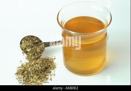 tea of Capsella bursa-pastoris, known by its common name shepherd's-purse - Stock Photo
