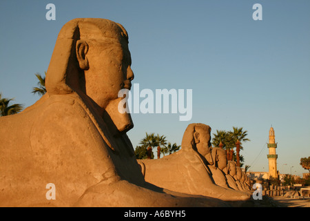 Avenue of Sphinxes with minaret in background - Stock Photo